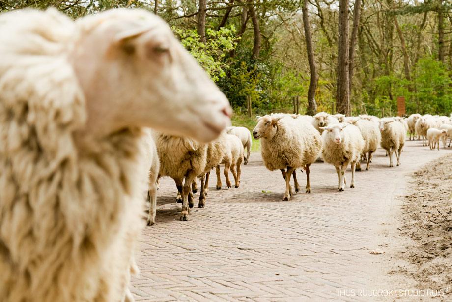 _DSC4612-bew-schapeninbergen-920px