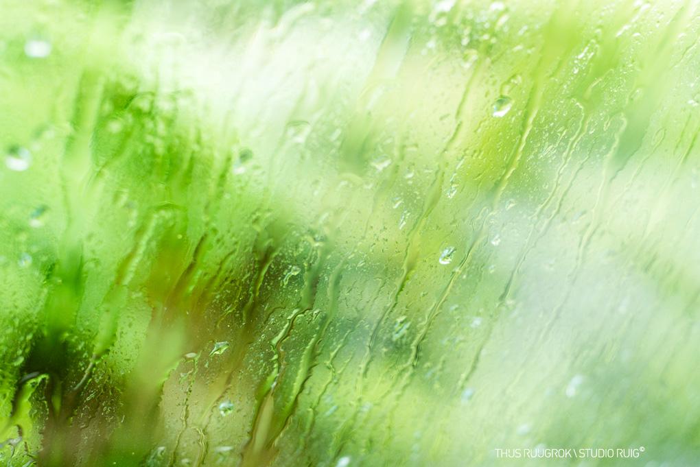 _DSC4619-rainyday3-1020px