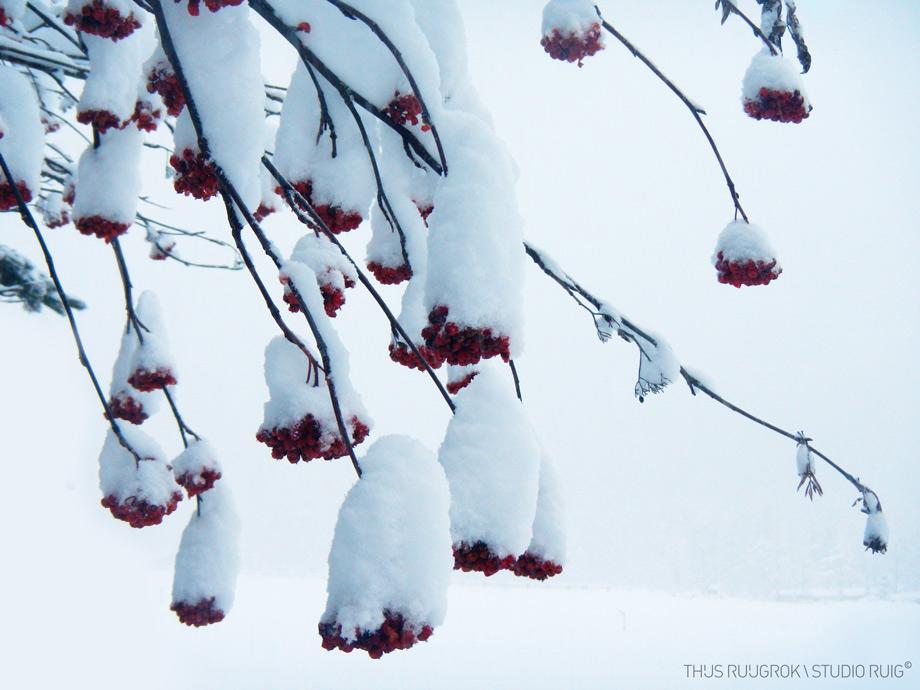 DSCN1063-bew-sneeuwklokjes-920px